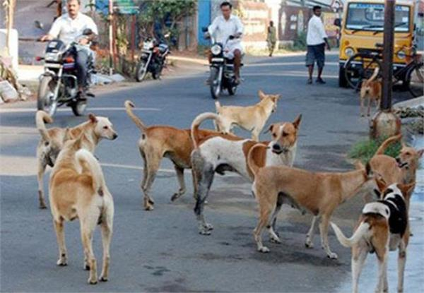 कुत्तों में पार्वो वायरस तेजी से फैल रहा